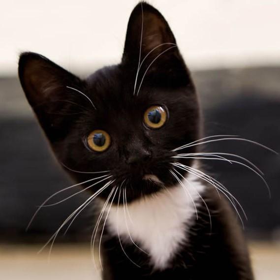 Jay Bird's Deceased Masterlist Cat4-410