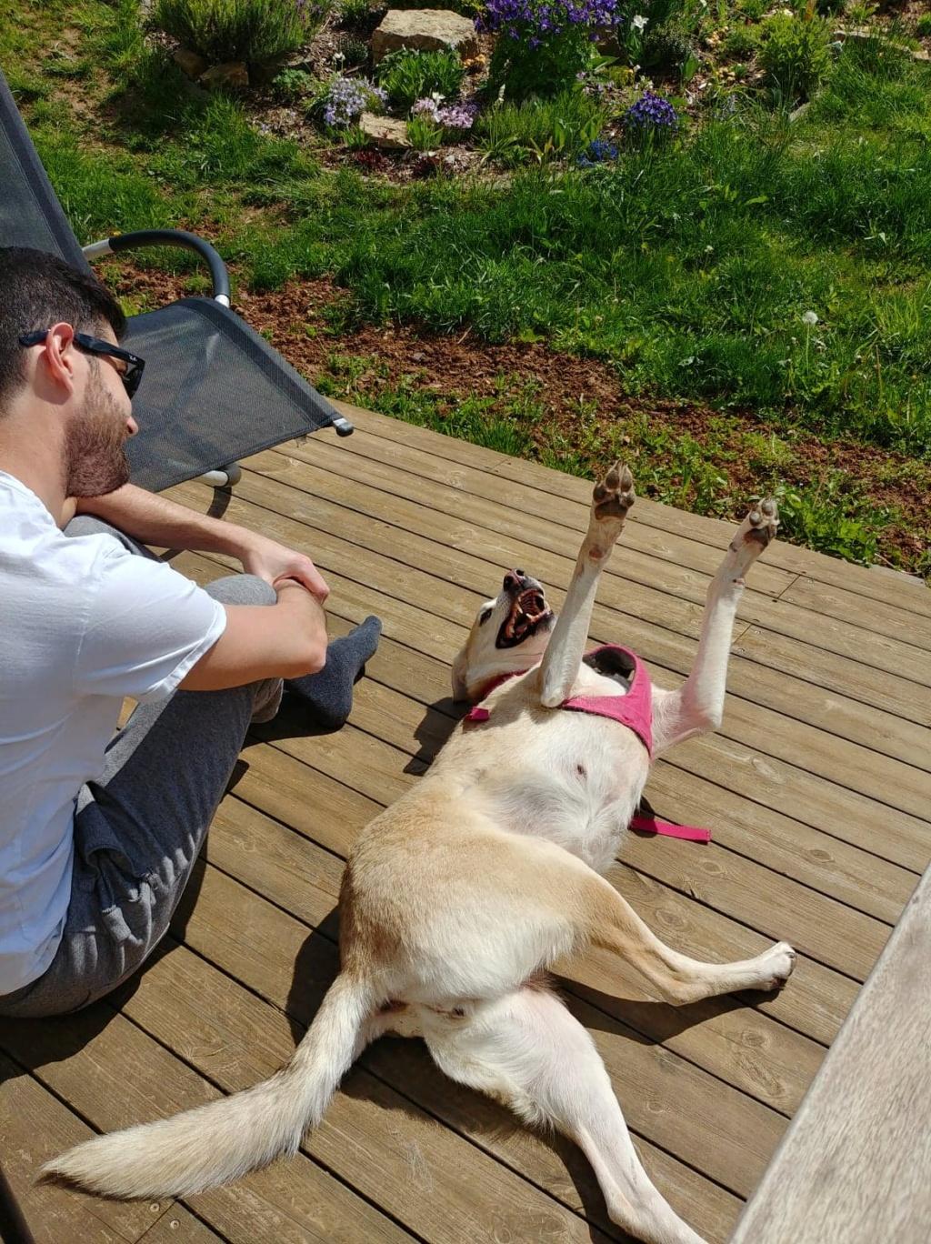 DIANA - femelle Labrador x Retriever de grande taille, née environ février 2010 (Camelia)- adoptée par Béatrice (54)  - Page 3 59930310