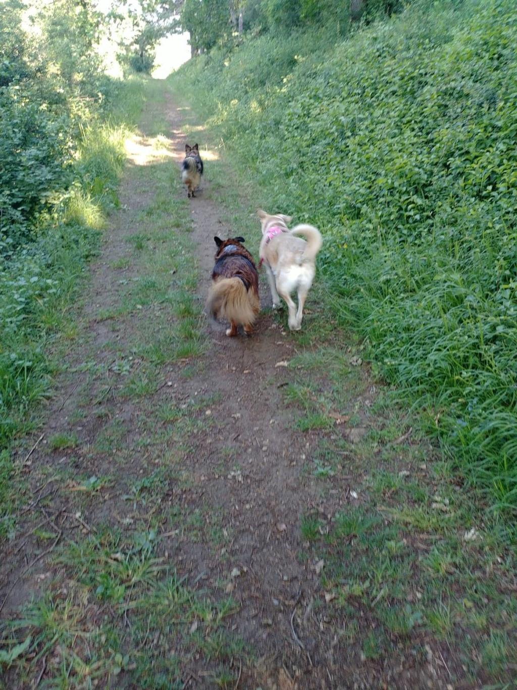 DIANA - femelle Labrador x Retriever de grande taille, née environ février 2010 (Camelia)- adoptée par Béatrice (54)  - Page 3 65393710