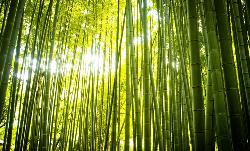 El viento entre el bambú El_vie10