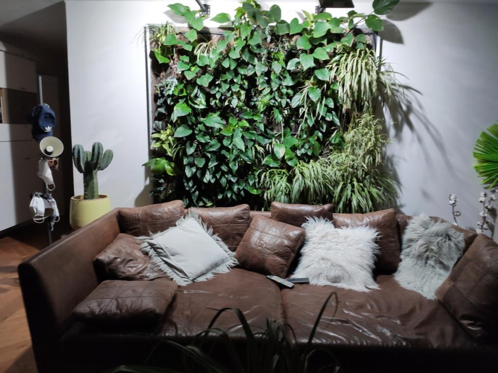 Mur Végétal horizontal, bac à côté? 16002810