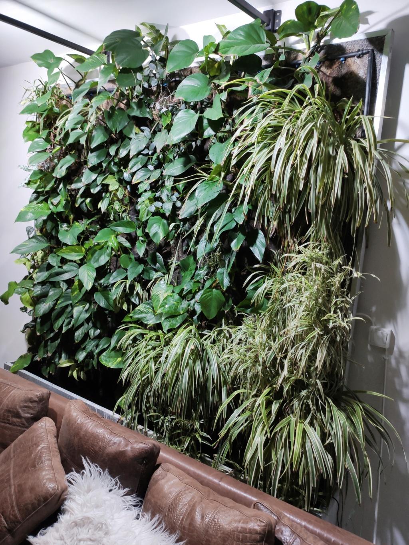 Mur Végétal horizontal, bac à côté? 16002811