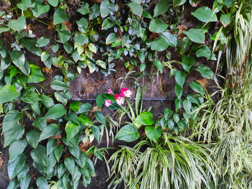 Mur Végétal horizontal, bac à côté? - Page 11 Img_2012