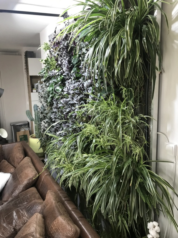Mur Végétal horizontal, bac à côté? Img_6711