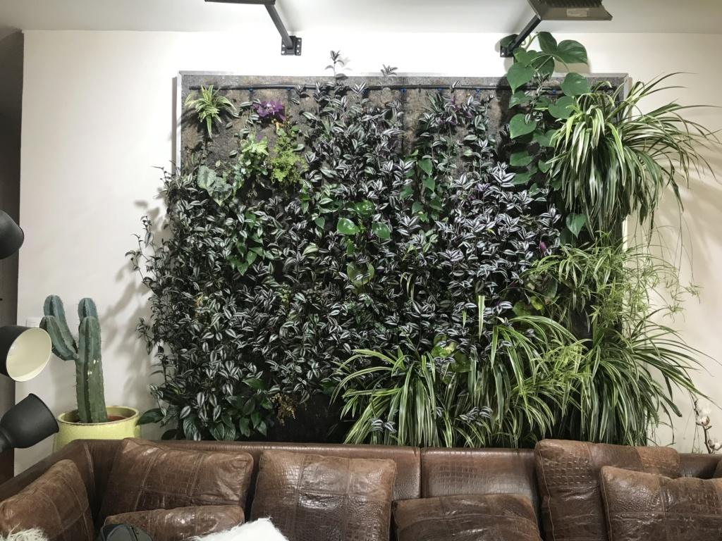 Mur Végétal horizontal, bac à côté? Img_6713