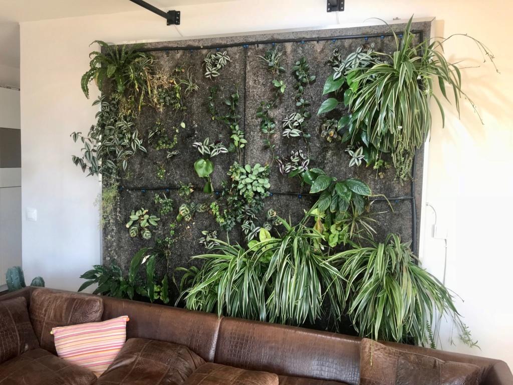 Mur Végétal horizontal, bac à côté? - Page 10 Img_7410
