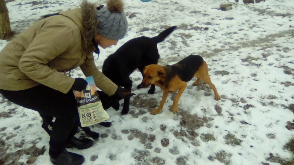 SERBIE - Refuge Bella - Arrivée du 13 janvier 2019 - Page 3 49212610