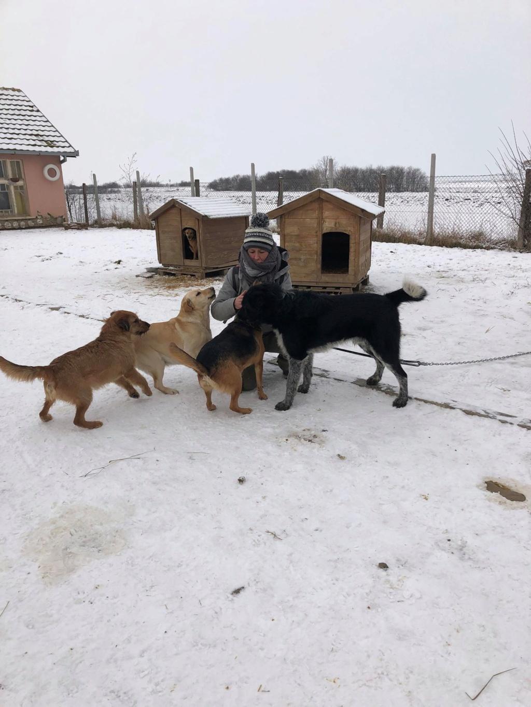 SERBIE - Refuge Bella - Arrivée du 13 janvier 2019 - Page 3 49212910