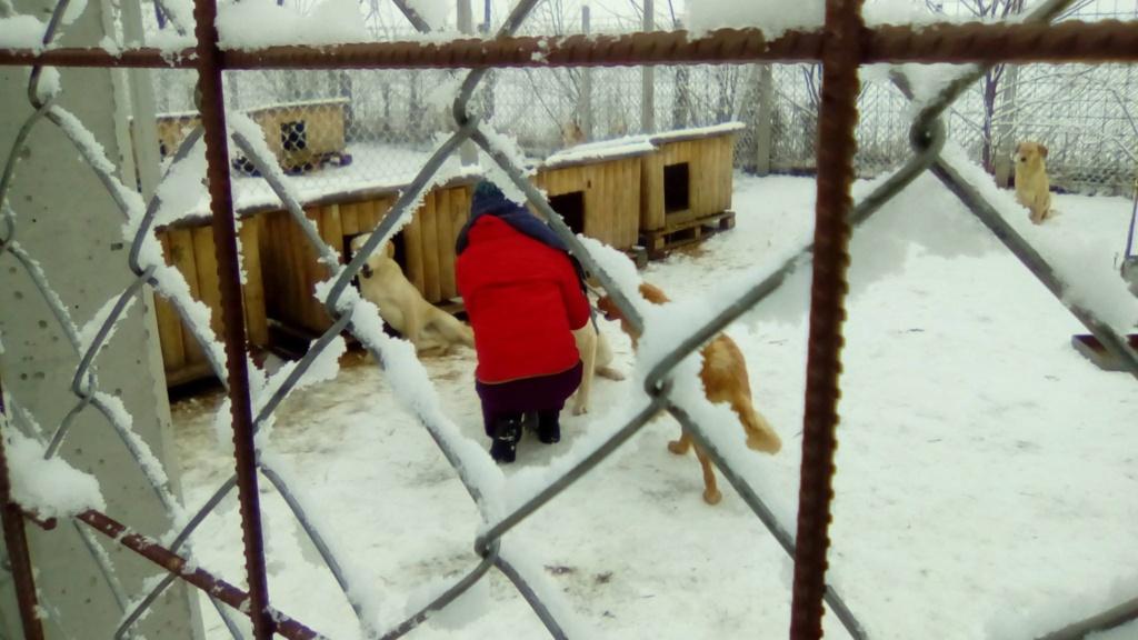 SERBIE - Refuge Bella - Arrivée du 13 janvier 2019 - Page 3 49389710