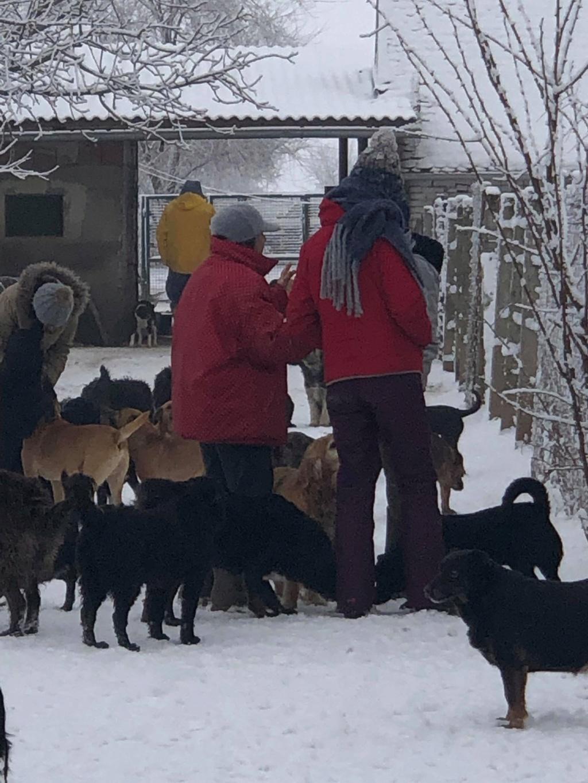 SERBIE - Refuge Bella - Arrivée du 13 janvier 2019 - Page 3 49444710