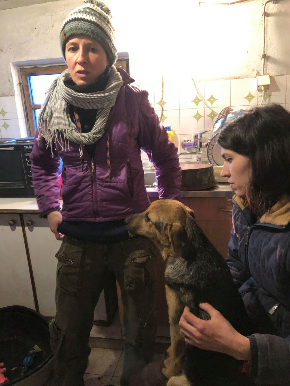 SERBIE - Refuge Bella - Arrivée du 13 janvier 2019 - Page 3 49735110