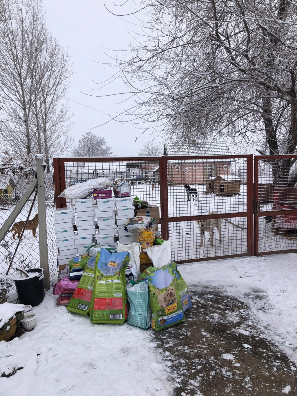 SERBIE - Refuge Bella - Arrivée du 13 janvier 2019 - Page 3 49759110