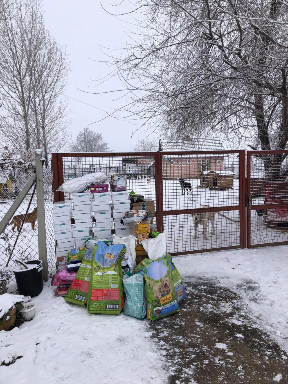 SERBIE - Refuge Bella - Arrivée du 13 janvier 2019 - Page 3 49759111