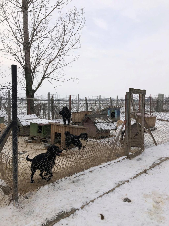 SERBIE - Refuge Bella - Arrivée du 13 janvier 2019 - Page 3 49775710