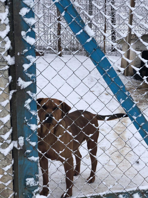 SERBIE - Refuge Bella - Arrivée du 13 janvier 2019 - Page 3 49801110