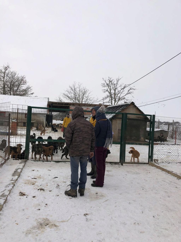SERBIE - Refuge Bella - Arrivée du 13 janvier 2019 - Page 3 49811610