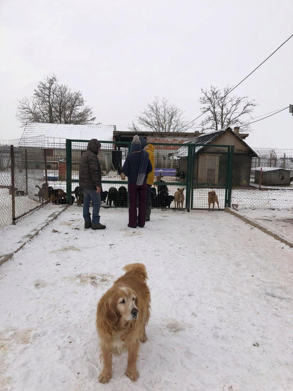 SERBIE - Refuge Bella - Arrivée du 13 janvier 2019 - Page 3 49834110