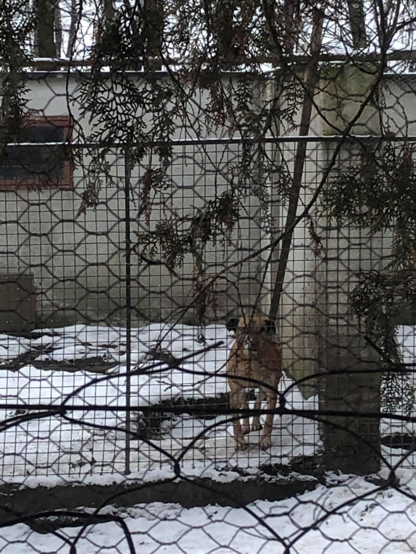 SERBIE - Refuge Bella - Arrivée du 13 janvier 2019 - Page 3 49836910