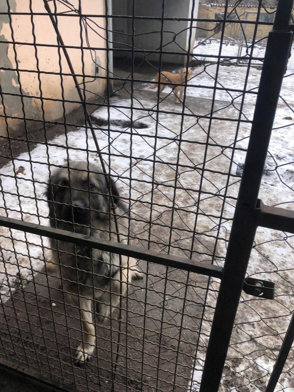 SERBIE - Refuge Bella - Arrivée du 13 janvier 2019 - Page 3 49848511