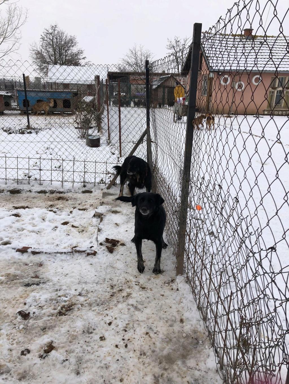 SERBIE - Refuge Bella - Arrivée du 13 janvier 2019 - Page 3 49897710