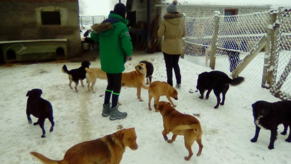 SERBIE - Refuge Bella - Arrivée du 13 janvier 2019 - Page 3 49938710