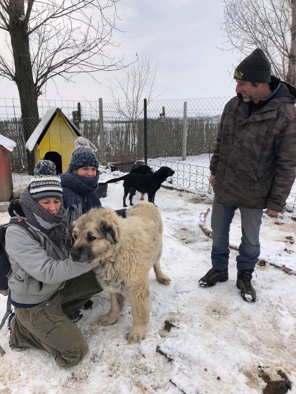 SERBIE - Refuge Bella - Arrivée du 13 janvier 2019 - Page 3 49946710