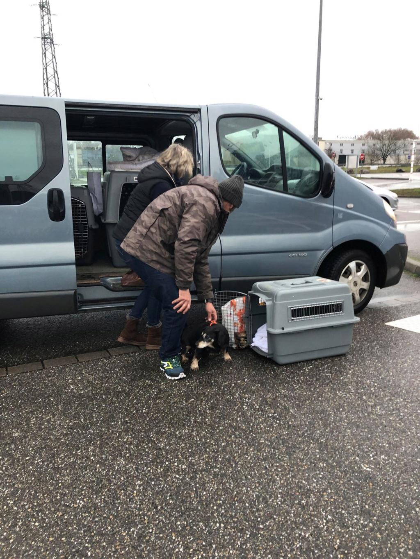 SERBIE - Refuge Bella - Arrivée du 13 janvier 2019 - Page 3 49948011