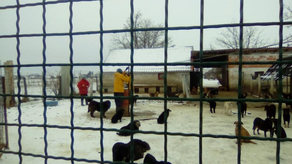 SERBIE - Refuge Bella - Arrivée du 13 janvier 2019 - Page 3 50009410
