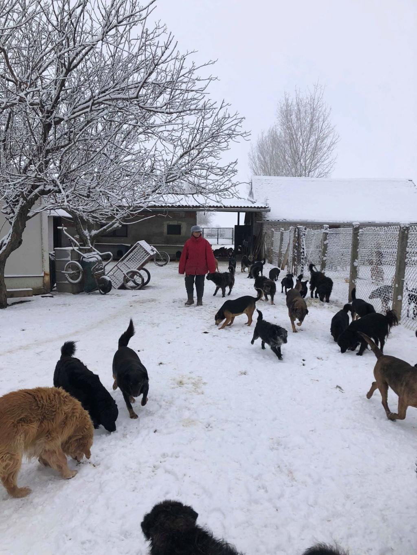 SERBIE - Refuge Bella - Arrivée du 13 janvier 2019 - Page 3 50042810