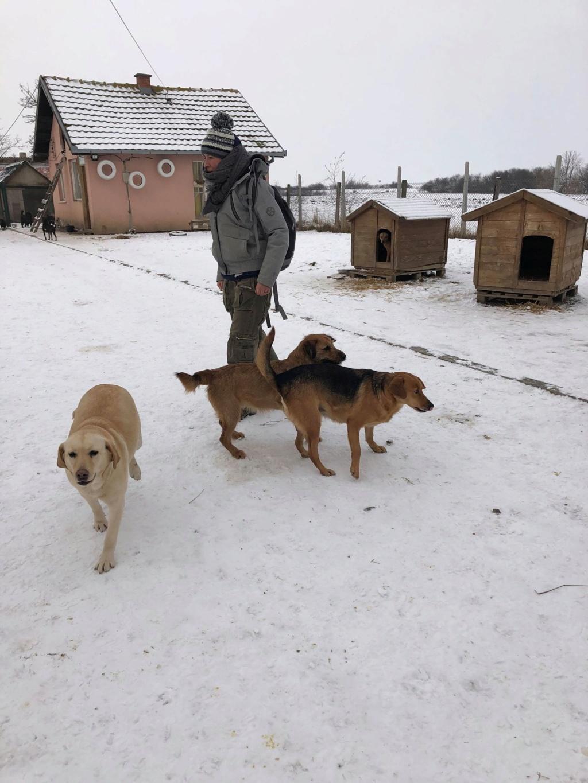 SERBIE - Refuge Bella - Arrivée du 13 janvier 2019 - Page 3 50076710