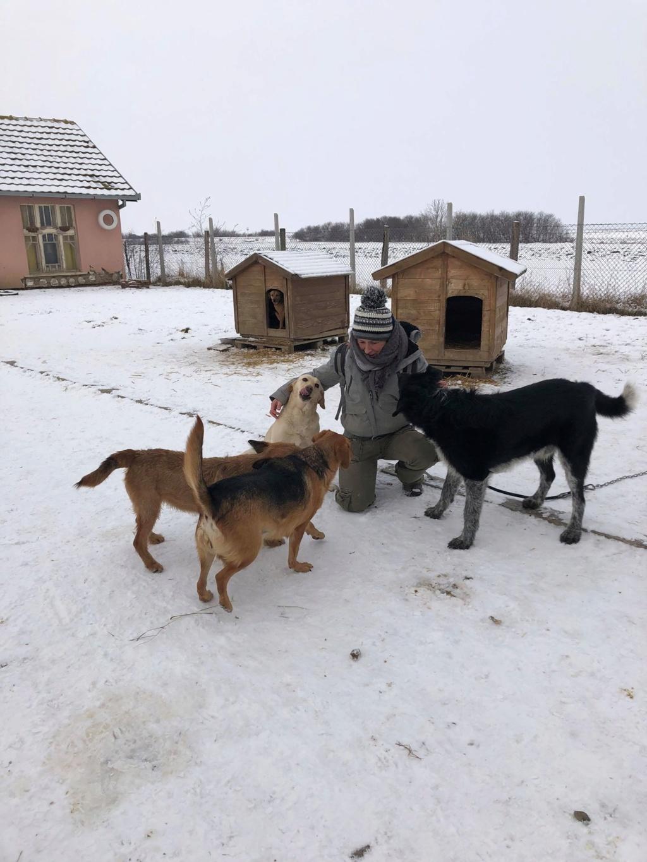 SERBIE - Refuge Bella - Arrivée du 13 janvier 2019 - Page 3 50085410
