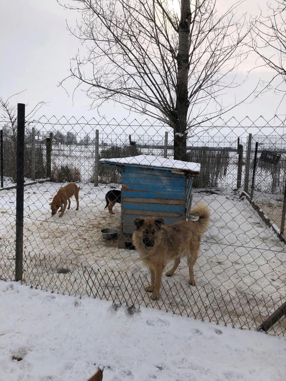 SERBIE - Refuge Bella - Arrivée du 13 janvier 2019 - Page 3 50240910