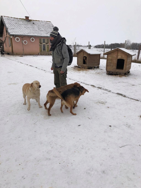 SERBIE - Refuge Bella - Arrivée du 13 janvier 2019 - Page 3 50274310