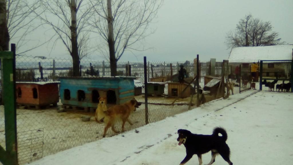 SERBIE - Refuge Bella - Arrivée du 13 janvier 2019 - Page 3 50294410
