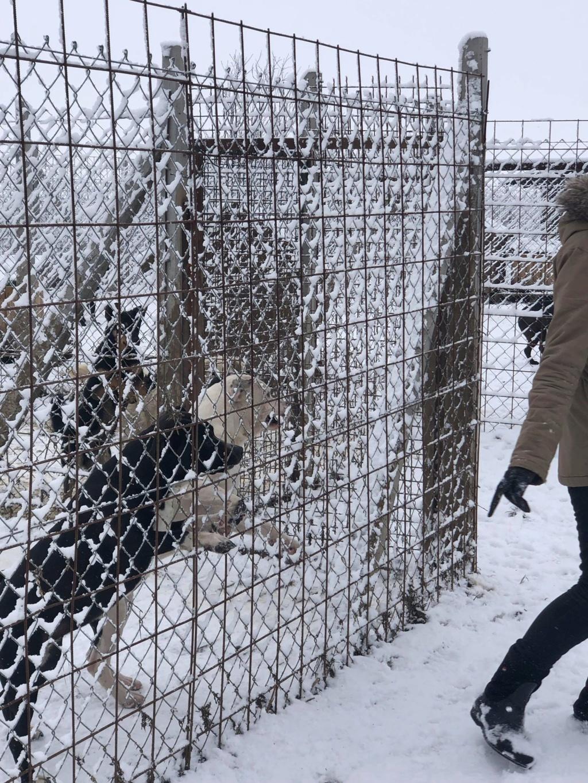 SERBIE - Refuge Bella - Arrivée du 13 janvier 2019 - Page 3 50536310