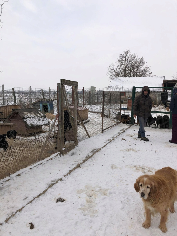 SERBIE - Refuge Bella - Arrivée du 13 janvier 2019 - Page 3 50554410