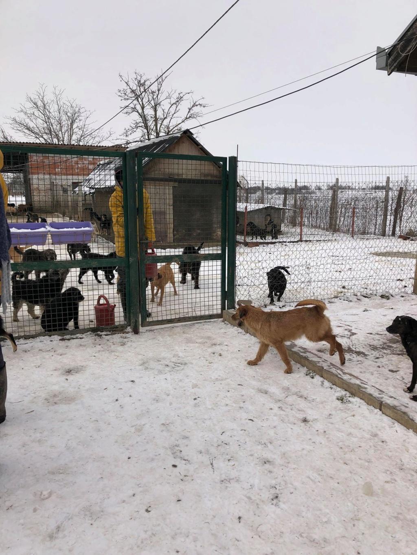 SERBIE - Refuge Bella - Arrivée du 13 janvier 2019 - Page 3 50594710