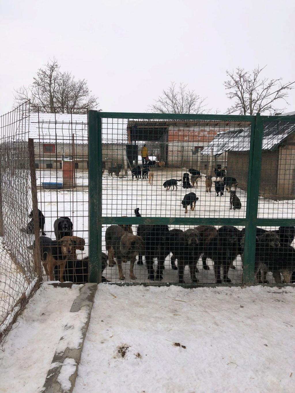 SERBIE - Refuge Bella - Arrivée du 13 janvier 2019 - Page 3 50603710