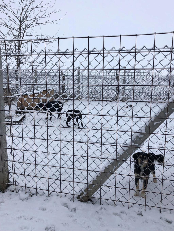 SERBIE - Refuge Bella - Arrivée du 13 janvier 2019 - Page 3 50610810