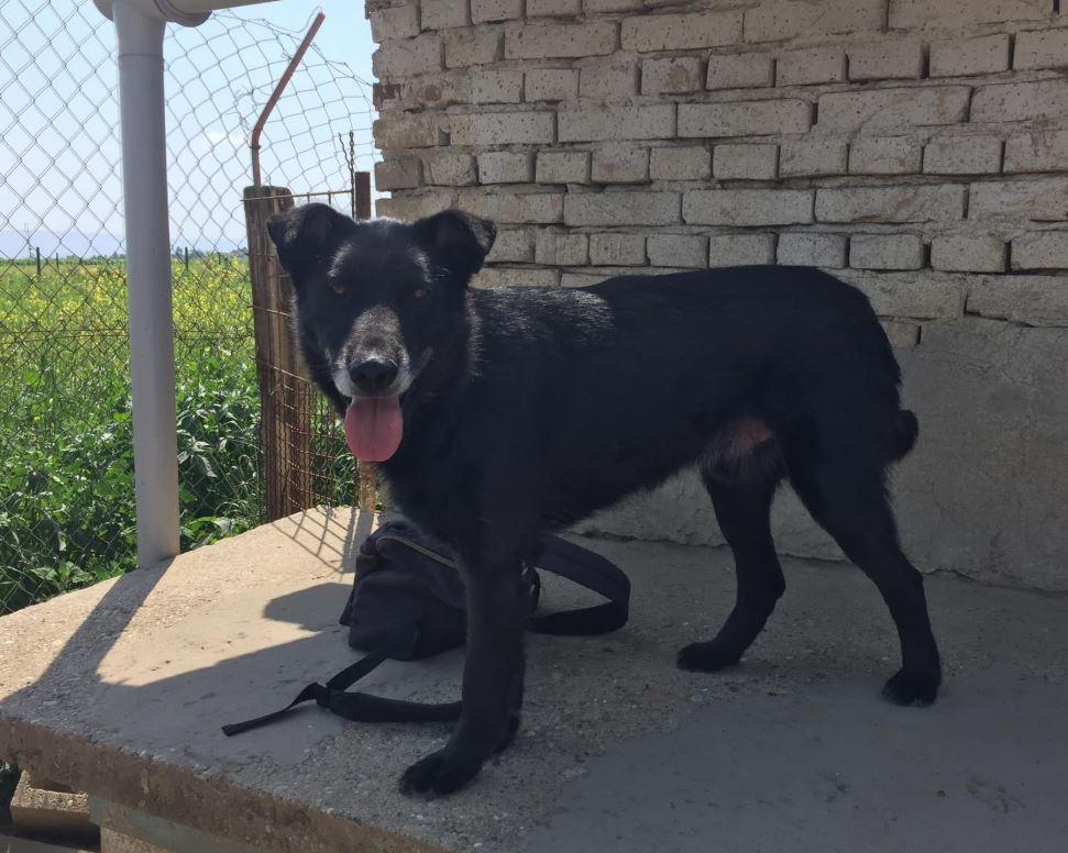 JUSTIN M-X labrador noir, taille moyenne, env. 25 kg, né 2013 Ex-Backa(BELLA)PRET/ BESOIN DE SOINS - Page 3 Justin10