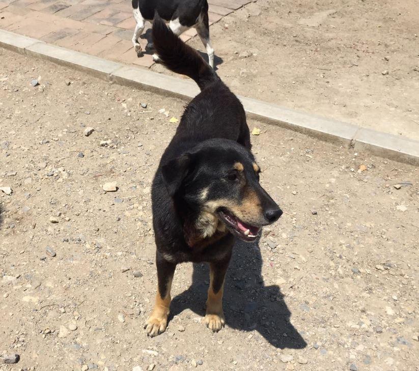 srechko - SRECHKO - Né avril 2017 - 17 kg - Un petit chien parfait (BELLA) - Prêt à voyager en nov 2020 Srechk10