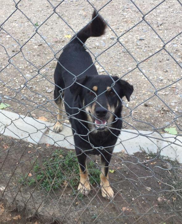 srechko - SRECHKO - Né avril 2017 - 17 kg - Un petit chien parfait (BELLA) - Prêt à voyager en nov 2020 Srechk11