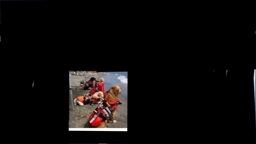 chiens interdits sur les plages Chiens10