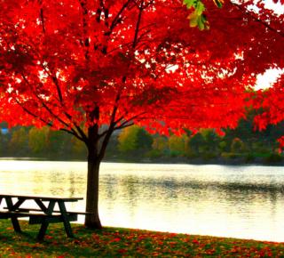 Tree Symbolism 28785711