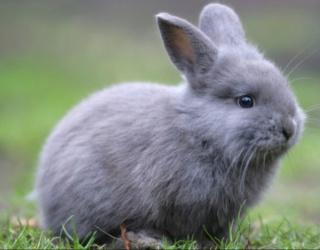 Maggio, cicogna vai a fare un bel viaggio! In questi mesi hai toppato e il coniglio abbiam chiamato! Scherm16