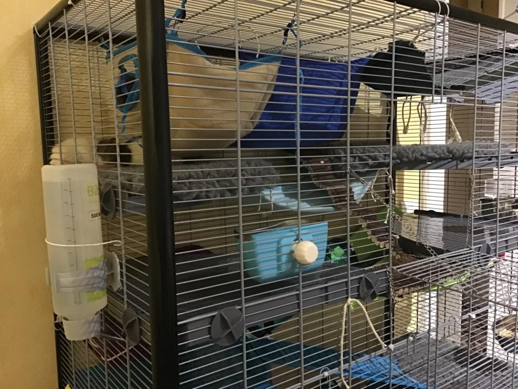 Photos de vos cages - Page 12 1f4e5510