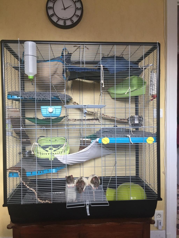 Photos de vos cages - Page 12 34c44e10