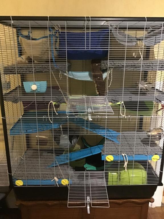Photos de vos cages - Page 12 D06bc610