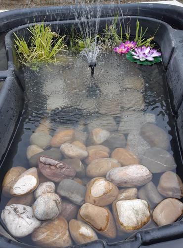 Conseil pour la vie dans un bassin extérieur 0410