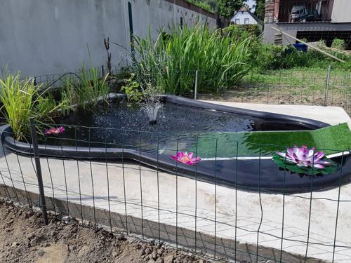 Conseil pour la vie dans un bassin extérieur Charlo10